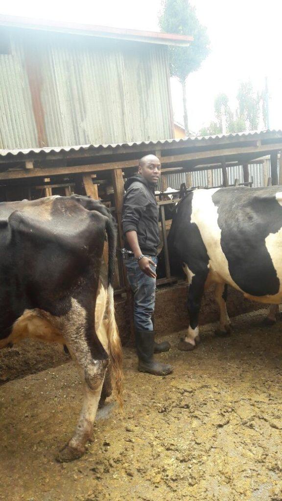 Biko Kithingi Green Farm Dairy